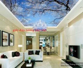Giấy dán trần nhà đẹp C028