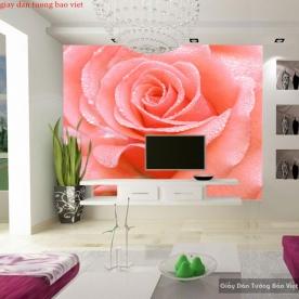 Giấy dán tường hoa hồng H206