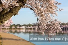 Tranh Giấy Dán Tường 3D Phong Cảnh Thiên Nhiên Sông Núi LK 1502-4