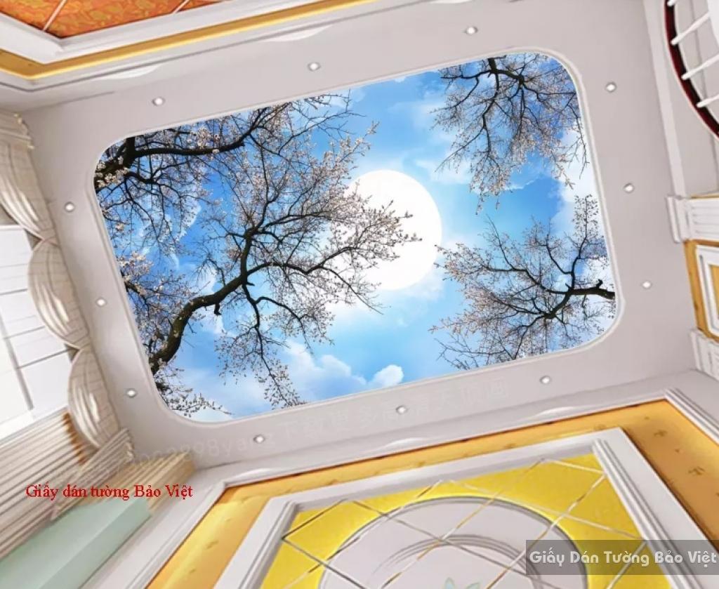 Giấy dán trần nhà C086