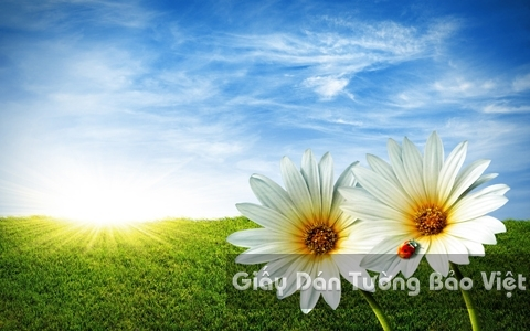 Tranh Giấy Dán Tường 3D Phong Cảnh Thiên Nhiên Cánh Đồng Hoa FL001-2
