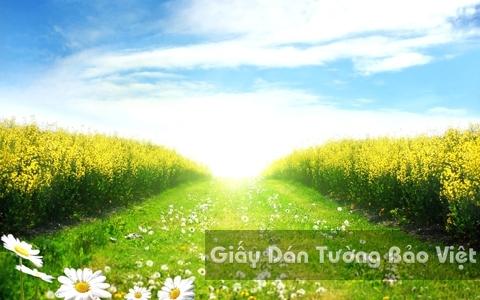 Tranh Giấy Dán Tường 3D Phong Cảnh Thiên Nhiên Cánh Đồng Hoa FL002-2