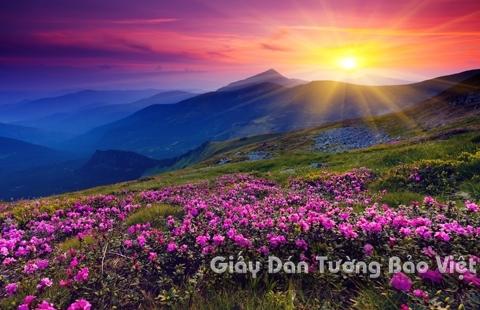 Tranh Giấy Dán Tường 3D Phong Cảnh Thiên Nhiên Cánh Đồng Hoa FLLS 1501-1