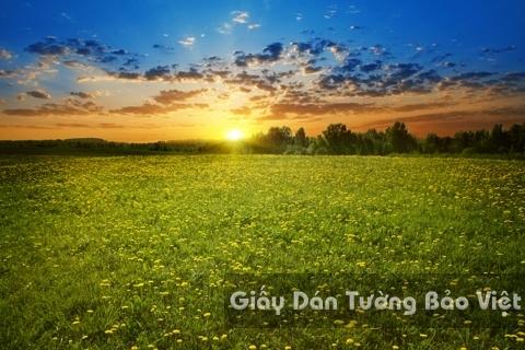 Tranh Giấy Dán Tường 3D Phong Cảnh Thiên Nhiên Cánh Đồng Hoa FLLS 1501-12