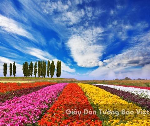 Tranh Giấy Dán Tường 3D Phong Cảnh Thiên Nhiên Cánh Đồng Hoa FLLS 1501-15