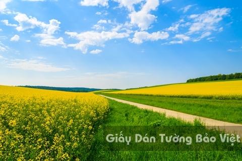Tranh Giấy Dán Tường 3D Phong Cảnh Thiên Nhiên Cánh Đồng Hoa FLLS 1501-17