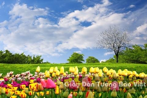 Tranh Giấy Dán Tường 3D Phong Cảnh Thiên Nhiên Cánh Đồng Hoa FLLS 1501-19